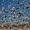 Casa Rizzini Goose Hunting